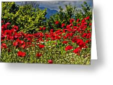 Poppies In Remembrance Greeting Card
