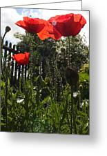 Poppies In The Sun Greeting Card by Stephen Norris
