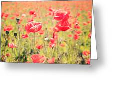 Poppies In Tuscany - Italy Greeting Card