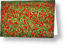 Poppies In Wheat Greeting Card