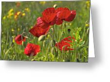 Poppies In Yorkshire Greeting Card