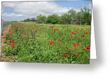 Poppies Near Hondo Greeting Card
