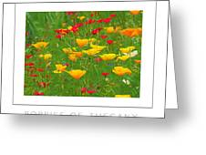 Poppies Of Tuscany Poster Greeting Card