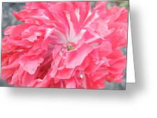 Popping Pink Greeting Card