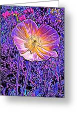 Poppy 3 Greeting Card