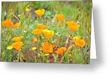 Poppy 36 Greeting Card