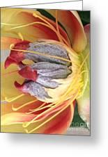 Poppy 4 Greeting Card