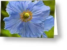 Poppy 6 Greeting Card