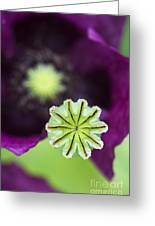 Poppy Abstract Greeting Card by Tim Gainey