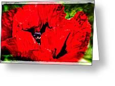 Giant Poppy Art  Greeting Card