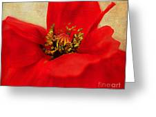 Poppy Art Greeting Card by Darren Fisher