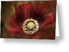 Poppy At Days End Greeting Card