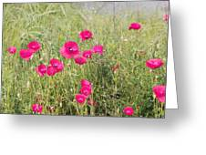Poppy Blush Greeting Card