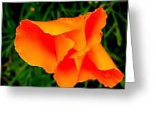 Poppy Dew Greeting Card