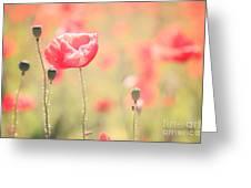 Poppy Field In Tuscany - Italy Greeting Card