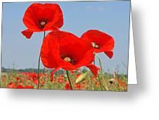 Poppy Fields 4 Greeting Card