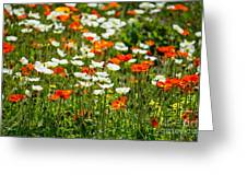 Poppy Fields - Beautiful Field Of Spring Poppy Flowers In Bloom. Greeting Card