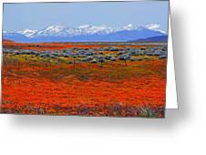 Poppy Fields Forever Greeting Card