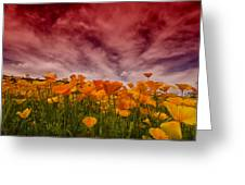 Poppy Fields Forever Greeting Card