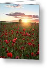 Poppy Fields Of Sweden Greeting Card