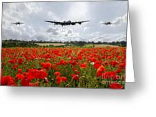 Poppy Fly Past Greeting Card
