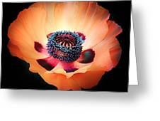 Poppy In The Darkness Greeting Card