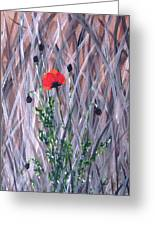 Poppy In The Wild Greeting Card