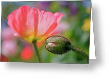 Poppy In Waiting Greeting Card
