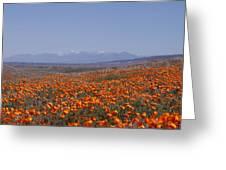 Poppy Land Greeting Card