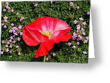 Poppy On Thyme  Greeting Card