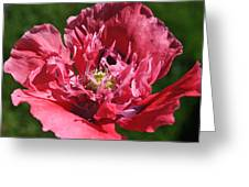 Poppy Pink Greeting Card