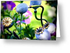 Poppy Pods And Curvy Stems. Greeting Card