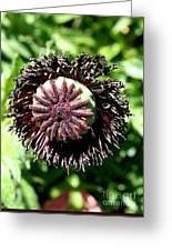 Poppy Seed Capsule Greeting Card