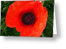 Poppy Of Remembrance  Greeting Card
