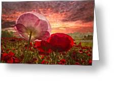 Poppy Sunrise Greeting Card by Debra and Dave Vanderlaan