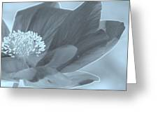 Poppy Tinge Greeting Card