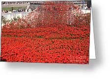 Poppy Tribute Of The Century. Greeting Card
