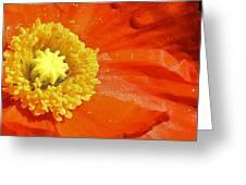 Poppy Up Close Greeting Card