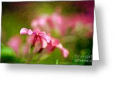 Popsicle Pink Greeting Card