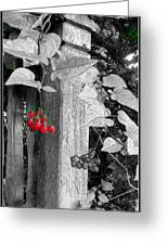Porch Post Berries Color Punch Greeting Card