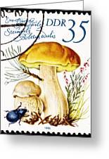 Porcini Mushroom Boletus Edulis Greeting Card