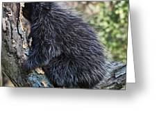 Porcupine Sleeping Greeting Card