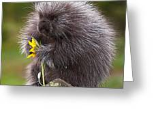 Porcupine With Arrowleaf Balsamroot Greeting Card