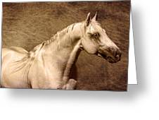 Portait Of A Stallion Greeting Card