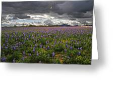 Porter Ranch Wildflowers   Greeting Card