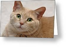 Portrait - Orange Tabby Cat Greeting Card