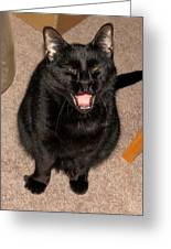 Portrait Of A Black Shorthair Cat With Open Mouth Greeting Card