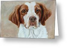 Portrait Of A Brittany Spaniel Greeting Card