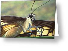 Portrait Of A Butterfly Greeting Card