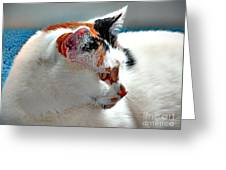 Portrait Of A Calico Greeting Card
